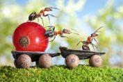 Мравки вкъщи? Не и след тази рецепта