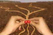 Приложна магия: Вържете късмета с възел